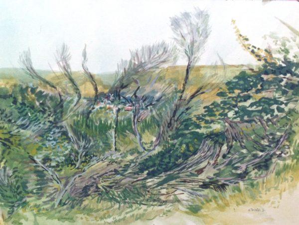 1994 Abusivi nella riserva